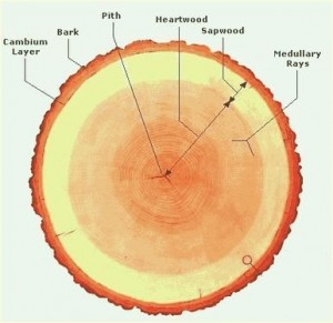 Log Cross Section